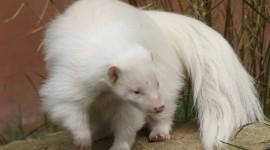 Albino Animals Photo