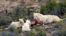 Albino Animals Photo Free#2