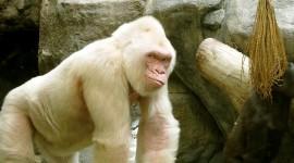 Albino Animals Photo Free#3
