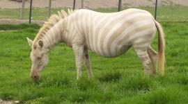 Albino Animals Photo#3