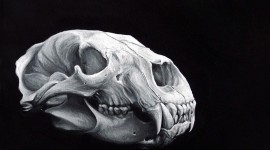 Animal Skull Wallpaper Download Free
