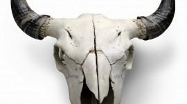 Animal Skull Wallpaper For Mobile