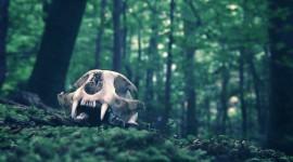 Animal Skull Wallpaper HD