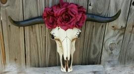 Animal Skull Wallpaper HQ