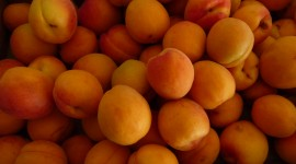 Apricots Wallpaper Download