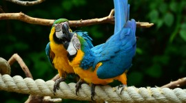 Ara Parrot High Quality Wallpaper