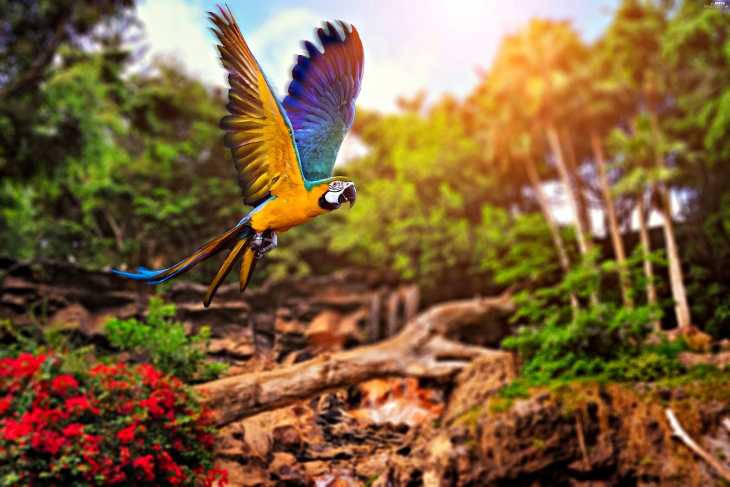 Ara Parrot wallpapers HD