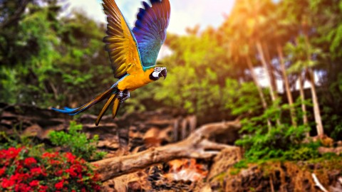 Ara Parrot wallpapers high quality