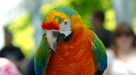 Ara Parrot Wallpaper Download