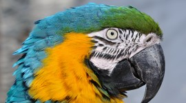 Ara Parrot Wallpaper Download Free