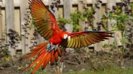 Ara Parrot Wallpaper Free
