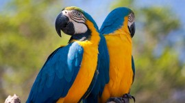 Ara Parrot Wallpaper High Definition