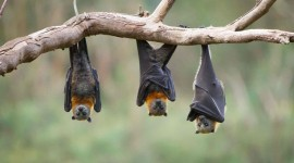 Bats Best Wallpaper