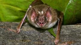 Bats Desktop Wallpaper