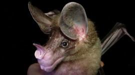 Bats Photo Free
