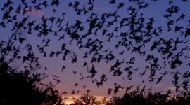 Bats Photo#1