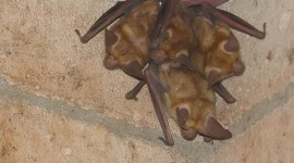 Bats Photo#2