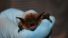 Bats Photo#3