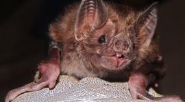 Bats Wallpaper Download