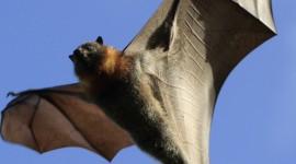 Bats Wallpaper For IPhone
