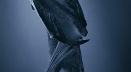 Bats Wallpaper For Mobile