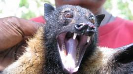 Bats Wallpaper Free#3