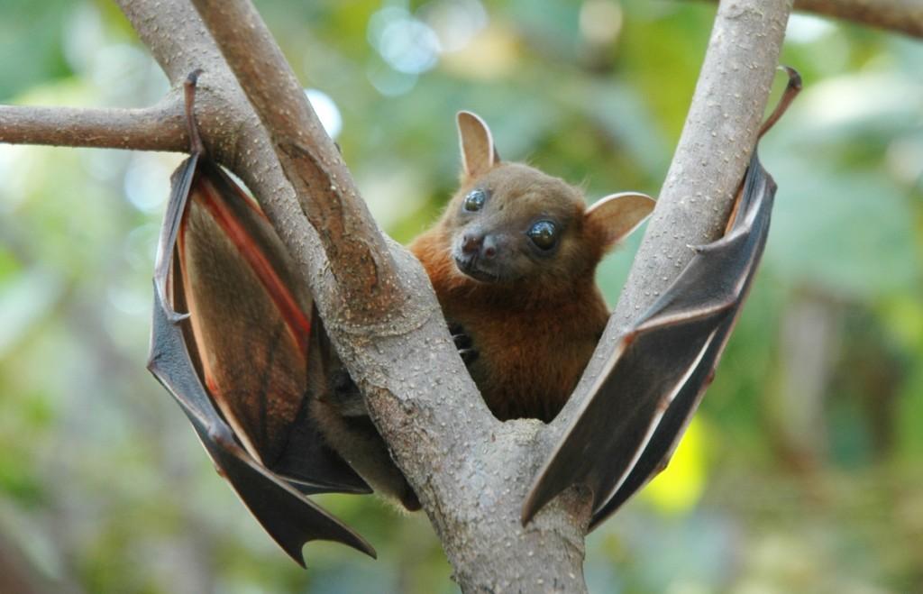 Bats wallpapers HD