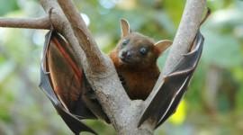 Bats Wallpaper HQ