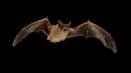 Bats Wallpaper#1