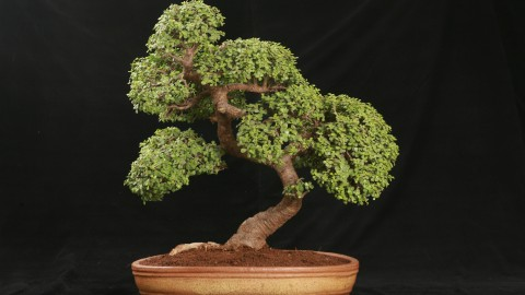 Bonsai wallpapers high quality
