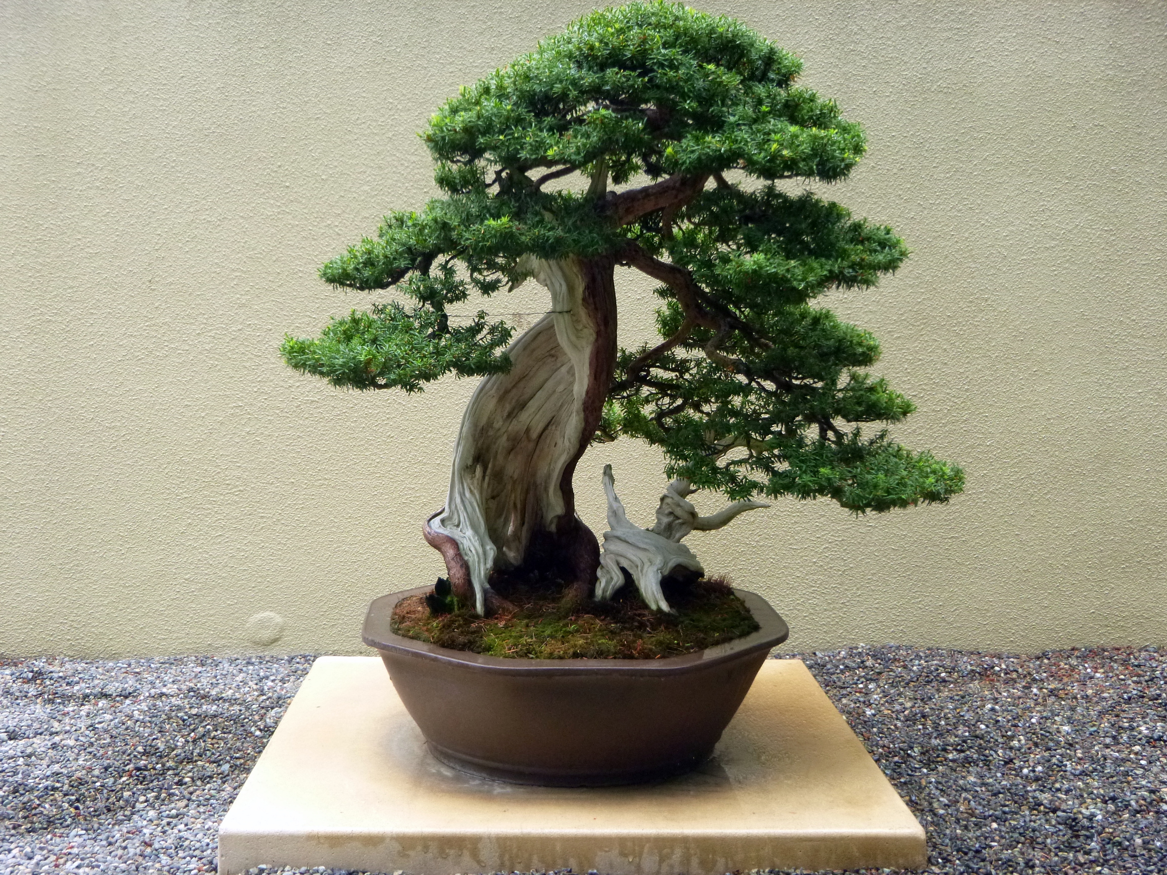 bonsai wallpapers high quality download free