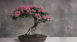 Bonsai Wallpaper Gallery