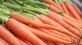 Carrot Wallpaper For Desktop