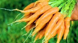 Carrot Wallpaper Full HD