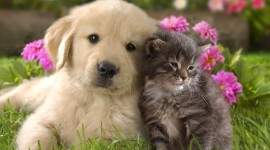 Cat And Dog Best Wallpaper