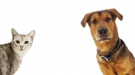 Cat And Dog High Quality Wallpaper
