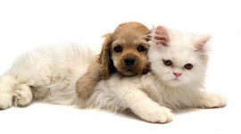 Cat And Dog Wallpaper Background