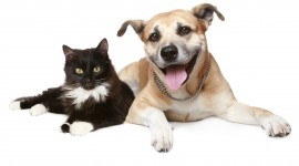 Cat And Dog Wallpaper Download