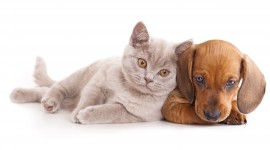 Cat And Dog Wallpaper Download Free