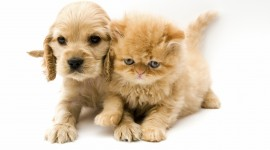 Cat And Dog Wallpaper Free