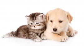 Cat And Dog Wallpaper Full HD