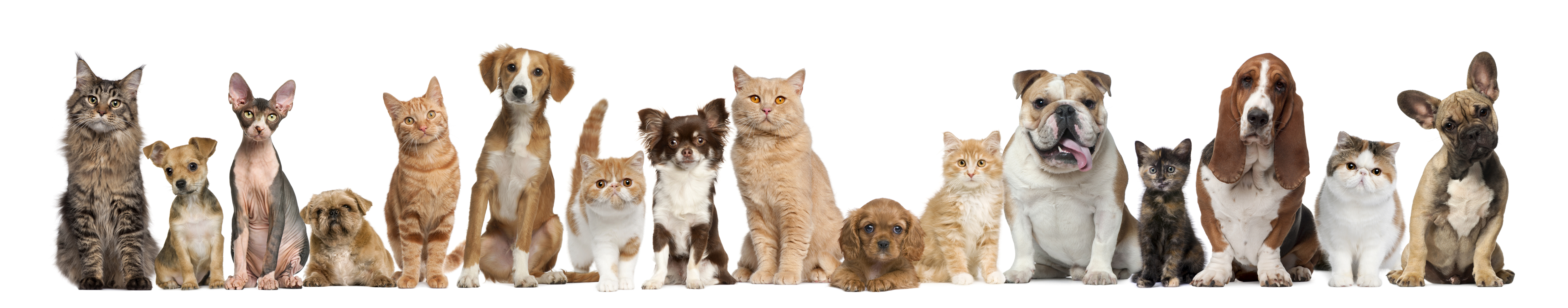 Cat And Dog Wallpaper Free Download Cat Drooling Breathing Difficulty