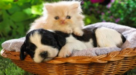Cat And Dog Wallpaper High Definition