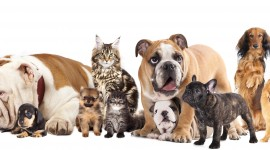 Cat And Dog Wallpaper Widescreen
