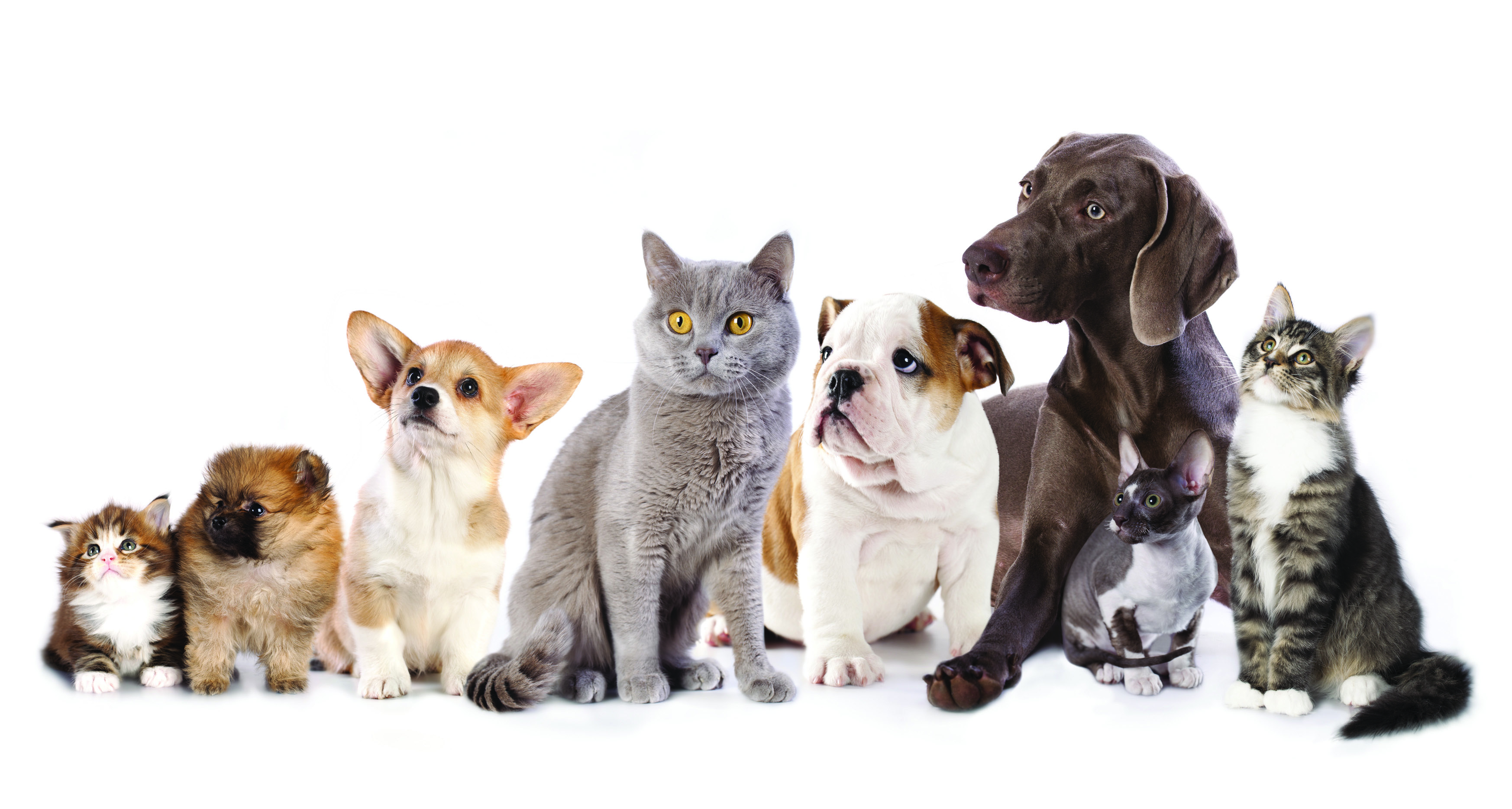 Cat And Dog Wallpapers High Quality