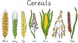Cereals Image