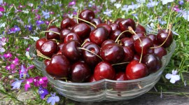 Cherry Wallpaper Download Free