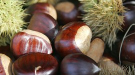 Chestnuts Photo Download