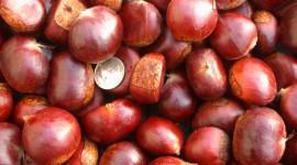 Chestnuts Wallpaper