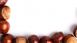 Chestnuts Wallpaper Download Free